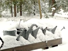 snowy watering cans Watering Cans, Winter Walk, Cottage Chic, Winter Wonderland, Old Things, Snow, Canning, Outdoor, Gardens