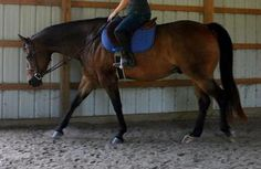 Hottie is a versatile horse, easily converting from English hunt seat to Western Pleasure. See him at Equine.com: http://www.equine.com/horses-for-sale/horse-ad-3655074.html