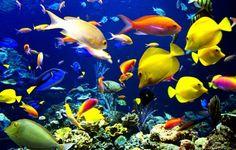 Fonds D'écran Animés Gratuits Aquarium