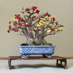~ To enjoy the bonsai, keep in mind some of the conventions ~