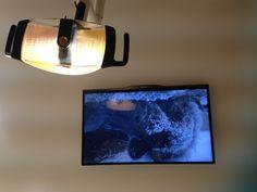 Afleiding met dieren in het wild voor de TV