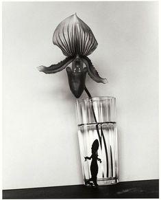 Araki Nobuyoshi, orchid flower and gecko Concept Photography, Still Life Photography, Fine Art Photography, Image Photography, Black And White Portraits, Black And White Photography, Visual Diary, Color Inspiration, Monochrome