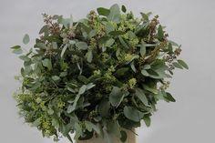 Эвкалипт Популус (лат. Eucalyptus Populus).