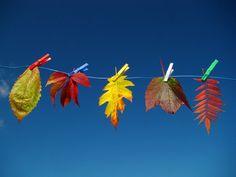 Bucato di foglie...    (Valter Orani - G+)