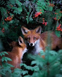 Animal Portraits by Joachim Munter – Inspiration Grid | Design Inspiration #photo #photography #photooftheday #portrait #animals #cuteanimals #photographyinspiration #inspirationgrid