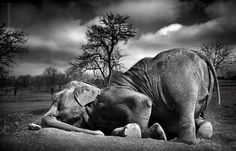 Sleeping Elephant by Leonardi Ranggana, via 500px