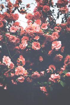 Resultado de imagen de iphone wallpaper tumblr