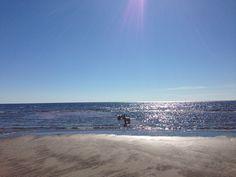 The sun, the sea, our dogs enjoying the beach life