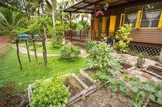 สวนผักปลูกเองในบ้านของพ่อกับแม่