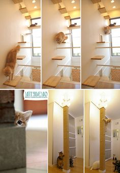 cats at home, home decoration for cats