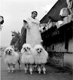 Marie-Chantal w/ poodles - chez les bouquinistes- Pierre Boulat, Paris, 1955 (via) Photo Vintage, Vintage Dog, Mode Vintage, Vintage Photographs, Vintage Photos, Tuileries Paris, French Poodles, Standard Poodles, Jean Marie