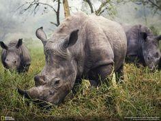 Découvrez les lauréats du concours de photos du National Geographic ! Ce sont de véritables pépites... juste incroyable !