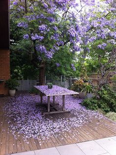 This isnt my garden, but it reminds me of it - with my neighbour's Jacaranda overhanging - pretty, and pretty annoying too! :-)