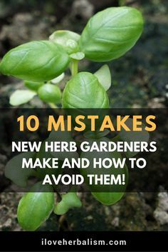 Container Gardening For Beginners Herb growing mistakes to avoid in your garden - 5 Dos and Don't for Planting Herbs. Simple advice to help your container herb garden thrive so you can have fresh herbs any time for any recipe or dish! Culture D'herbes, Plantas Indoor, Pot Jardin, Organic Gardening Tips, Vegetable Gardening, Gardening Books, Gardening Gloves, Kitchen Gardening, Kitchen Herbs