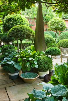 973 Best Landscaping Boxwood Topiaries Images In 2020 Garden