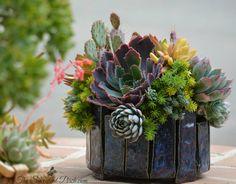 The Succulent Perch www.thesucculentperch.com www.facebook.com/thesucculentperch