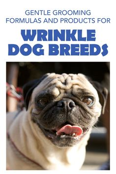 Lover of wrinkly dog breeds do but unsure which dog grooming supplies you need to handle bad smell and irritated skin on their adorable squishy faces? Our hypoallergenic wrinkle paste is a water-repellent cream that's made for your dogs skin care needs, and it's easy to use at home! Keep their wrinkles clean and kissable with our magical paste! Dog Grooming Tips, Dog Grooming Supplies, English Bulldog Care, Dog Skin Allergies, Wrinkly Dog, Dog Hot Spots, Food Dog, Itchy Dog, Dog Cleaning
