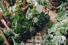 Instagram is a wonderful thing. It joins us all together and introduces us  to things/people/places that we might not have seen otherwise. This place  is somewhere that we found this way and we're so glad that we did.  Conservatory Archives is a plant shop. It's a rough-and-ready space on  Hackney Road in London that is turning the concept of houseplants on it's  head... When I visited I could hardly move around the two small rooms,  let-alone get a collection of wide shots to show you just…