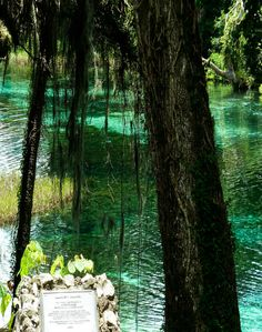 Check out Rainbow Springs State Park - a cool place to swim!