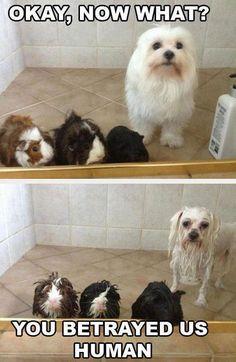 Fun bath? ;)