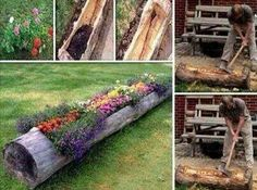 Purpose an old log as a flower bed!