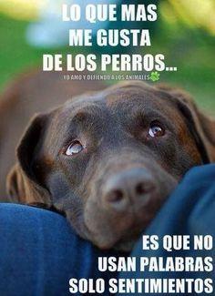Lo que más me gusta de los perros es que no usan palabras, sólo sentimientos ¡Buenas y perrunas noches!