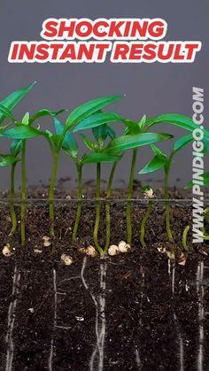 Garden Yard Ideas, Lawn And Garden, Garden Projects, Garden Plants, Indoor Plants, House Plants, Regrow Vegetables, Growing Vegetables, Plant Growth