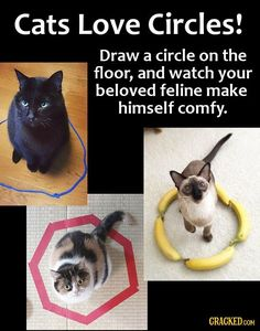 16 Money-Saving Life Hacks You Can Do With Everyday Products Funny Cats, Funny Animals, Cute Animals, I Love Cats, Crazy Cats, Cat Hacks, Doja Cat, Cute Kittens, Cat Behavior