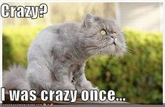 creepy kitty...