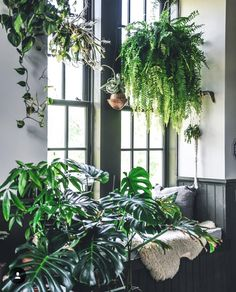 Indoor house plants can be a lovely expansion to any room in your home or even your office. Plants are accepted to help convey peace and mood to any space by keeping you in contact with nature. Potted Plants, Indoor Plants, Indoor Gardening, Hanging Plants, Deco Jungle, Hotel Concierge, Decoration Plante, Interior Plants, House Goals