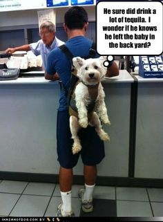 funny dog pictures - He sure did drink a lot of tequila.  I wonder if he knows he left the baby in the back yard?