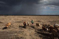 Vanishing Land Fuels Looming Crisis Across Africa