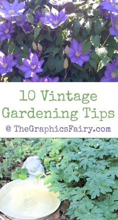 My Grandmother taught me all I know about gardening, and today I'd like to share some the the Vintage Gardening Tips she shared with me!  #GardeningTips