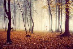http://ift.tt/1ZY8ZTJ #Nature breathtaking #Photos f by Gucko http://ift.tt/1XN1nig