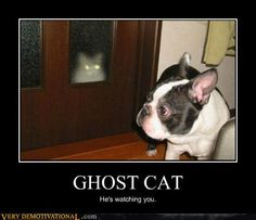 Ghost Cat - (click for full article) http://www.ilovedogsandcats.com/ghost-cat/ -