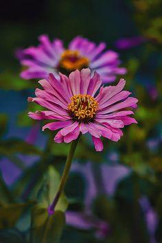 ~~ Pretty Pink Petals ~~