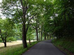 Wickwire Road - Grafton, West Virginia by JefferyTurner, via Flickr