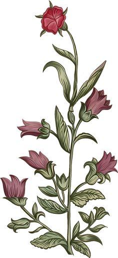 Botanical Flowers, Flowers Nature, Tropical Flowers, Draw Flowers, Border Embroidery Designs, Design Seeds, Album Design, Leaf Art, Border Design