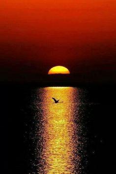 ♂ Sunset silhouette solo bird