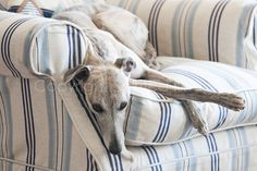 RELAXATION  Cleo the Whippet  Dog Photo Print by SpiritedImage, £20.00