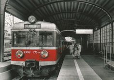 The Red Train, Radoslaw Maciejewski
