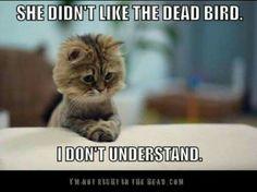 Sie liebt den toten Vogel nicht. Ich kann es nicht verstehen.