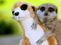 Real Animals with Stuffed Animals