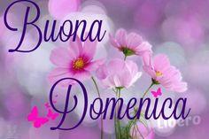 Belle foto Buongiorno Buona Domenica per mandare su Facebook e Whatsapp - BelleImmagini.it Italian Memes, Italian Quotes, Italian Greetings, Good Morning Good Night, Christmas Images, Happy Day, Birthday Cards, Lily, Facebook