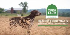 Reviews, Chews & How-Tos: Review/Giveaway: Open Farm Dog Food
