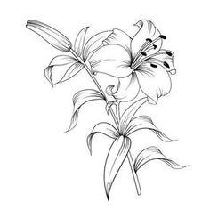 Art Drawings For Kids, Art Drawings Sketches, Tattoo Drawings, Flower Outline, Flower Art, Lilies Drawing, Forearm Tattoo Design, Flower Sketches, Hand Drawn Flowers