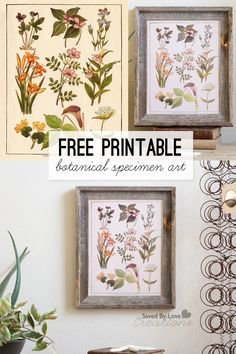 Free Printable Botanical Specimen Art from @savedbyloves