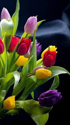 Tulpen – Blumen – You are in the right place about gardening shed Here we offer you the most beautiful pictures about the. Tulips Garden, Tulips Flowers, Flowers Nature, Floral Flowers, Pretty Flowers, Colorful Flowers, Spring Flowers, Planting Flowers, Beautiful Flowers Garden