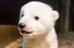 I custodi del parco lo hanno trovato riverso al fianco della madre. Vani i tentativi dei veterinari per salvarlo. Le cause del decesso sono da ricondurre a una misteriosa infezione al fegato.