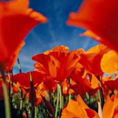 Perpetual Bloom by Peter Lik